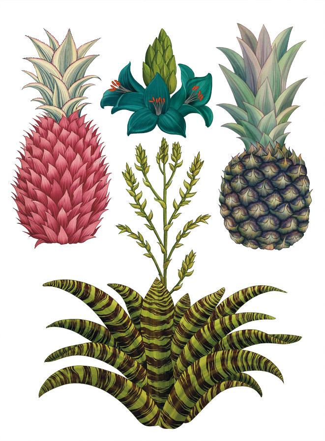 Bromeliads1